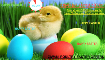 Easter offer from Ziwani Poultry